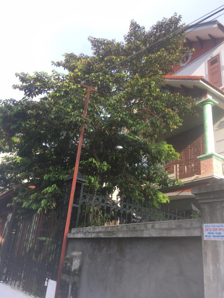 Bán Nhà 3 tầng 130m2 phố Tô Hiến Thành, Vĩnh Yên gần cổng viện 109